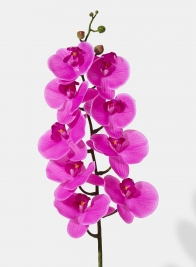 38in Pink Phalaenopsis Orchid