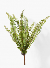 20in Boston Fern Bush