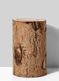 12in Paulownia Wood Tree Trunk