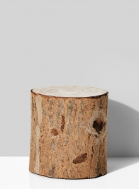 7in Paulownia Wood Tree Trunk