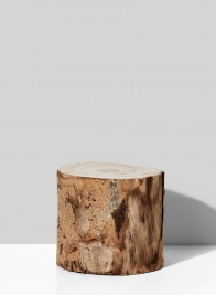 5in Paulownia Wood Tree Trunk