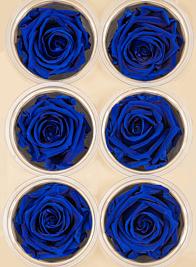 Preserved Deep Blue Roses, Set of 6