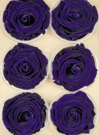 Preserved Purple Roses, Set of 6