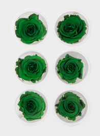 Preserved Green Roses, Set of 6