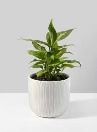 4 1/2in Stripe Relief Ceramic Vase
