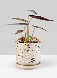 4 1/2in Confetti Grey Ceramic Pot & Saucer