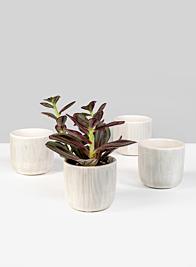 Stripe Relief Ceramic Vase, Set of 6