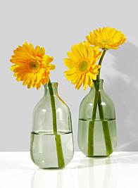 Light Green Bottle Bud Vase, Set of 2