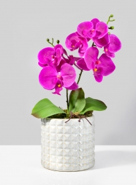 5 3/4in White Ceramic Studs Vase