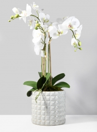 7 1/2in White Ceramic Studs Vase