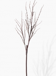 62in Twig Branch