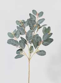 30in Green Seeded Eucalyptus Pick