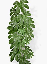 52in Fatsia Japonica Leaf Vine