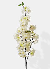 white cherry blossom spring flowers