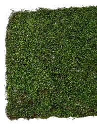 36in Leaf & Moss Mat