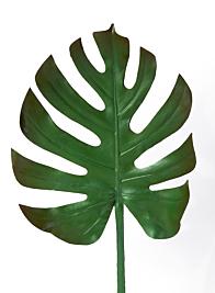 turtle leaf spray