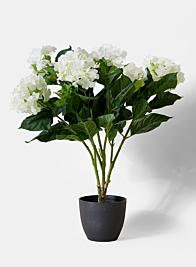 blooming white hydrangea plant window hotel lobby fake plants