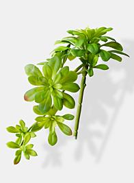 cascading atropurpureum articial succulent