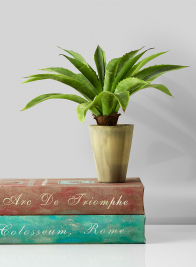 fake aloe plant in pot home decor retail display props