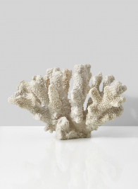 fake cats paw ocean coral