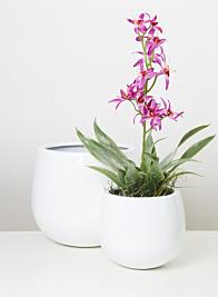 Glossy White Light Fieberstone Pot