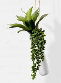burros tail and succulent artificial plant display