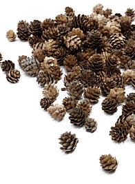 Natural Mini Pine Cones