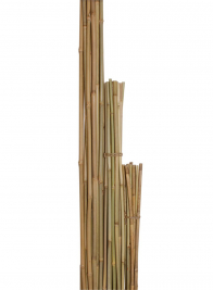 3ft - 6ft Natural Bamboo Stakes