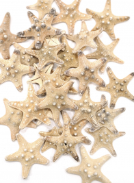 NATURAL KNOBBY STARFISH, SET OF 25