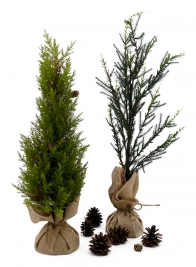 Pine Trees With Burlap Root Balls