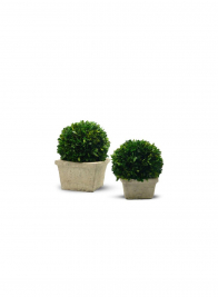 6in Preserved Boxwood Ball in Square Pot