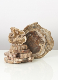 Petrified Wood Plates
