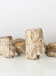3-9in Petrified Wood Mini Trunks