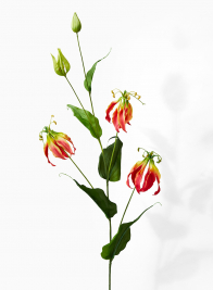 artificial red gloriosa lilies