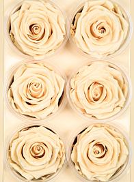 Preserved Porcelain Roses, Set of 6