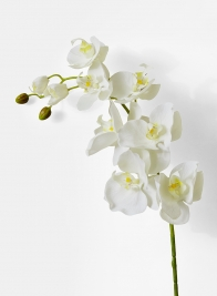 43in White Phalaenopsis Orchid Spray