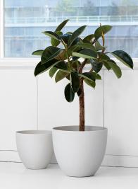 12in & 15in Sandstone Pots