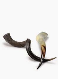 Kudu Horn & African Buffalo Horn