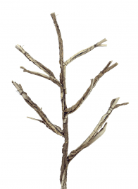 26in Twig Branch