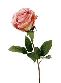 large pink zhen hui rose 27675H-PK