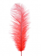 18 - 20in Red Ostrich Feather