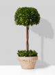 Half 10-inch Boxwood Ball Topiary