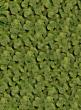 spring green moss