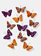 3 1/2in Orange, Purple & Copper Butterflies, Set of 12 24907