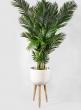 15 1/2in White Sandstone Round Pot On Wooden Leg