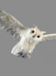 18in Flying White Owl