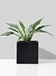 black ficonstone square plant pot
