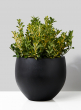 15in Black Ficonstone Fishbowl Pot