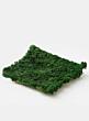 preserved green reindeer moss display props