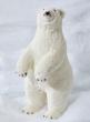 24in Polar Bear